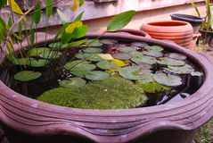 Lotus leaf in Ayutthaya Historical city Thailand. Water plant and lotus reaf in Ayutthaya Historical city Thailand.Plant and jar normally use in Thai traditional Stock Image