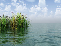 Water plants Stock Image