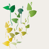 Water plants. Are collected in composition Royalty Free Stock Image