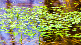 Water plants background Stock Photography