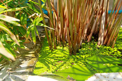 Water plants Stock Image