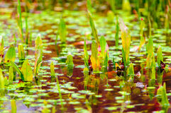 Water plants blood water danger poison Stock Images
