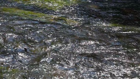 Water plants in clear mountain river water stock video footage