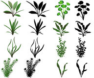 Water plants. Collection of different species of water plants vector illustration