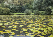 Water plants at Moses Gate Country Park at Farnworth. Water plants at Moses Gate Country Park, Farnworth, England, UK in early Autumn Royalty Free Stock Image