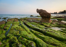 Water-plants and mosses on the beach in Nha trang, Vietnam Royalty Free Stock Image