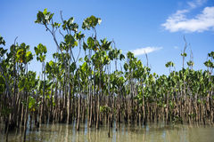 Water plants on the Parnaiba River, Brazil royalty free stock photography