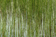 Water plants reflection background green Royalty Free Stock Photo