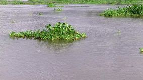Water plants swim in the river Stock Images