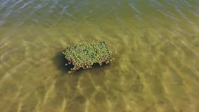 Water plants on thermal lake stock video footage