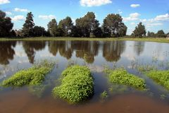 Water plants and trees. Water plants in pond-side and trees Stock Photo