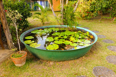 Water plants in a tropical pond Royalty Free Stock Images