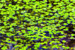 Water plants water clear Stock Photography