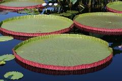 Water-platter Royalty Free Stock Photo
