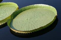 Water-platter Stock Image