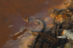 Water pollution. Image of the surface of a very polluted expanse of water stock image