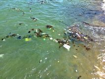 Water pollution. Caused by floating rubbish discarded in the sea Stock Photography