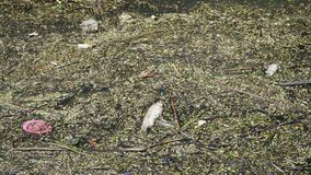 Water pollution in city royalty free stock photography