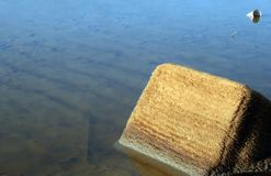 Water pollution environment damage Stock Image
