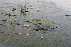 Water pollution - garbage on river surface Stock Images