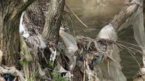 Water pollution - garbage on trees stock video footage