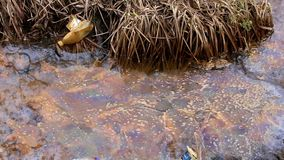 Water pollution. natural disaster. nature in danger. polluted environment. stock video