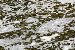 Water pollution with scum Stock Image