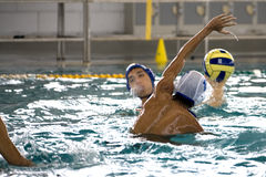 Water Polo Action Stock Images