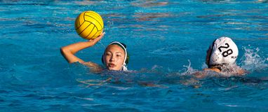 Water polo player prepares to throw ball stock image