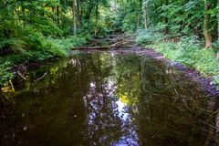 Water pond in Haagse Bos, forest in The Hague Royalty Free Stock Image