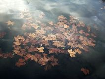 Water, Pond, Leaves, Autumn Royalty Free Stock Photography