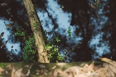 Water Pond With Leaves and Tree Branch Stock Photo