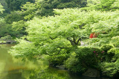 Water pond, plant, tree in Japanese zen garden. Water pond, plant, tree with reflection in Japanese zen garden Stock Photo