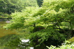 Water pond, plant, tree in Japanese zen garden Stock Photography