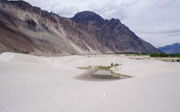 A water pool in the middle of desert at Nubra Valley. A small pool of water among the sand dunes at an altitude of over 11,000 feet above MSL, in Nubra Valley Royalty Free Stock Photo