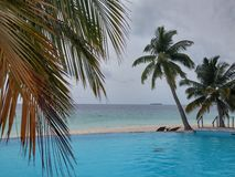 Water pool. With palms Royalty Free Stock Image