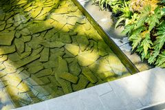 Water pool with rock stone on ground for decoration in garden or. Park. Landscape design Stock Photography