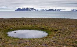 Water pool on the seashore of Svalbard Royalty Free Stock Photos