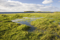 Water pools in green grass at coast line. Scotland Royalty Free Stock Photography