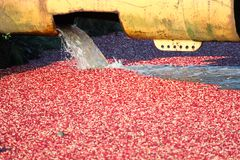 Water Pouring into a Cranberry Bog Royalty Free Stock Photography