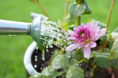 Water pouring flowers Stock Images