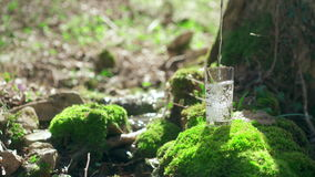 Water pours into glass standing on mossy rock under the tree. Spring stream in soft focus on background. Pure ecological stock video footage