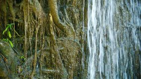 Water pours over the roots. Tropical waterfall close up Royalty Free Stock Image