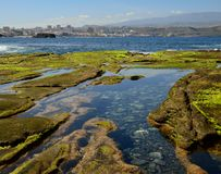 Puddles at low tide and city. Water puddles at low tide, The confital, coast of Las palmas, Gran canaria, Canary islands Stock Image
