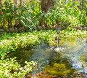 Water pump. Vintage looking water pump in pond Royalty Free Stock Image