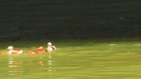 Water puppetry in Vietnam stock video