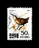 Water Rail Rallus aquaticus, Birds serie, circa 1990. MOSCOW, RUSSIA - NOVEMBER 24, 2017: A stamp printed in Democratic People`s republic of Korea shows Water Stock Images
