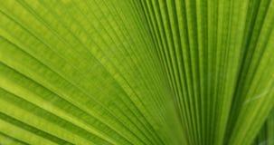 Water rain drop on green leaf nature. Water rain drop on green palm leaf nature stock video