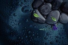 Water rain drop with stones on shiny luxury black and the  littl. Water rain drop with stones on shiny luxury black and little fresh green leaf with cute purple Royalty Free Stock Image