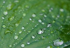 Water and rain drops on the leaf, abstract view, Drops of rain on green background / drops on leave after rain. Water and rain drops on the leaf, abstract view Stock Images